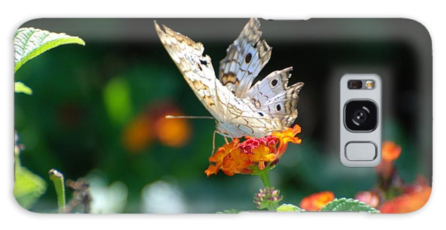 Butterfly Galaxy S8 Case featuring the photograph Winged Butter by Rob Hans
