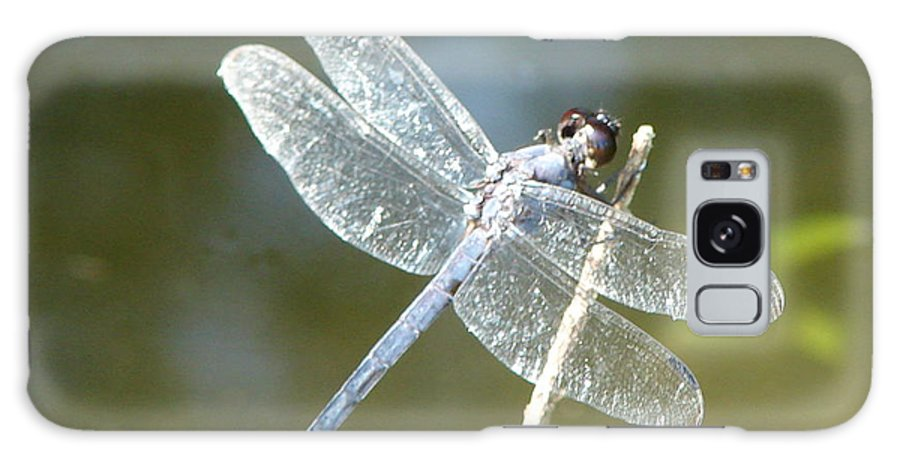 Dragonfly Wings Galaxy Case featuring the photograph Wings by Luciana Seymour