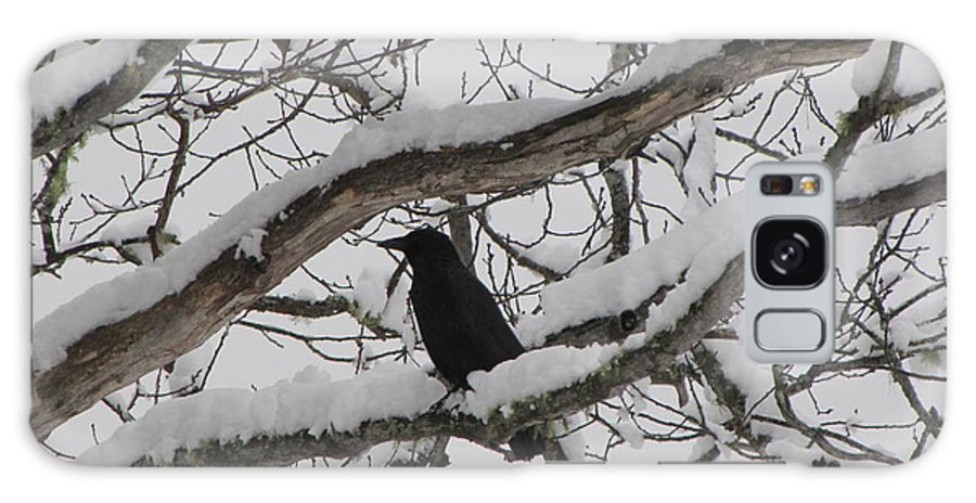 Crow Galaxy Case featuring the photograph Winter Crow by Melissa Parks