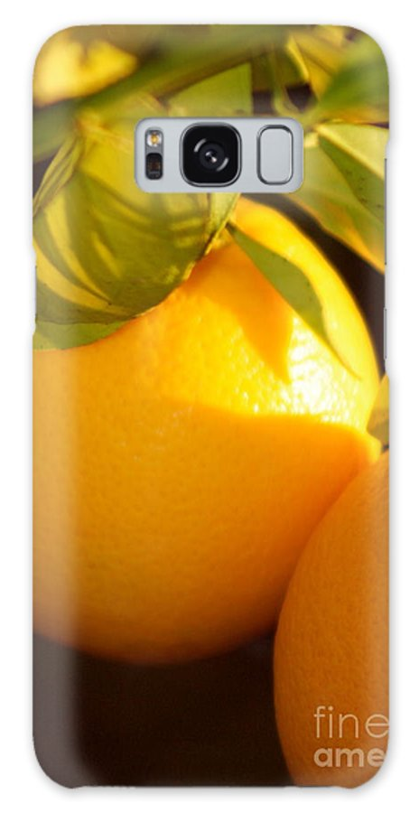 Fruit Galaxy S8 Case featuring the photograph Winter Fruit by Nadine Rippelmeyer