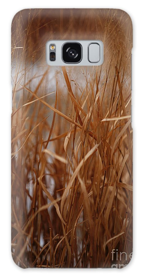 Grass Galaxy S8 Case featuring the photograph Winter Grass - 1 by Linda Shafer