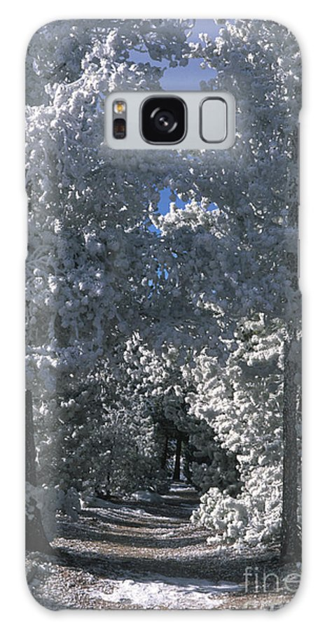 Yellowstone National Park Galaxy S8 Case featuring the photograph Winter Pathway by Sandra Bronstein