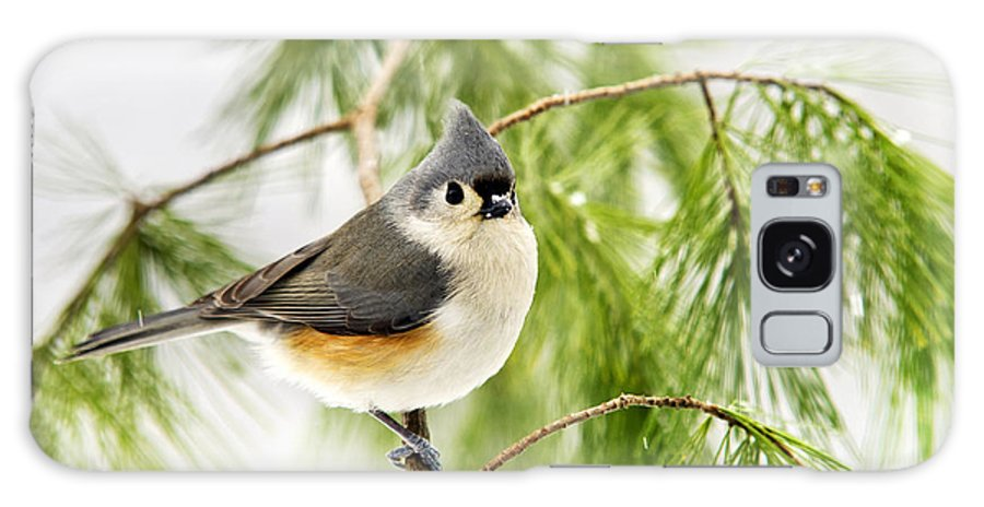 Winter Galaxy S8 Case featuring the photograph Winter Pine Bird by Christina Rollo