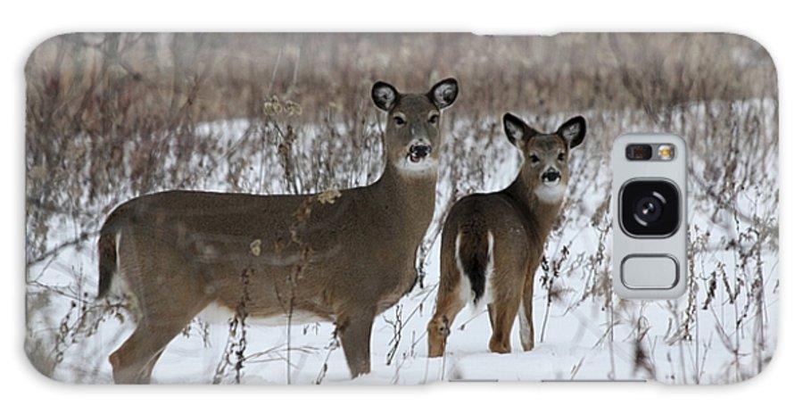 Deer Galaxy S8 Case featuring the photograph Winter Wonderland by Lori Tordsen