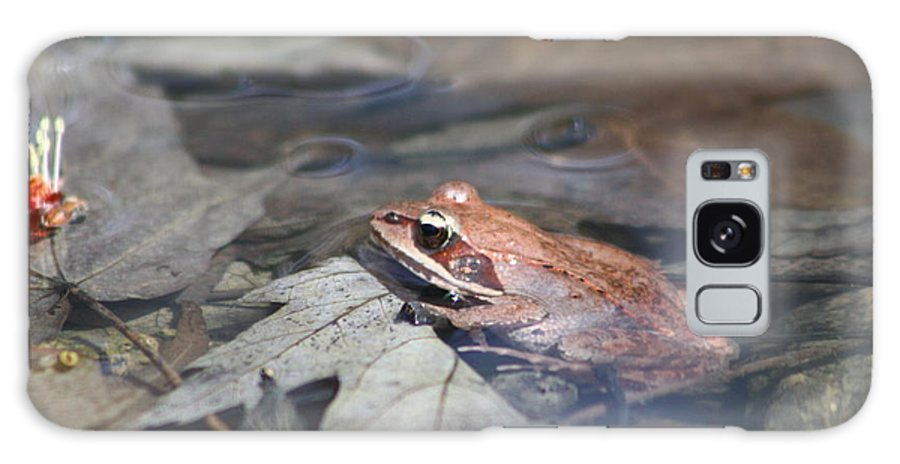 Frog Galaxy S8 Case featuring the photograph Wood Frog by Adam Schneider