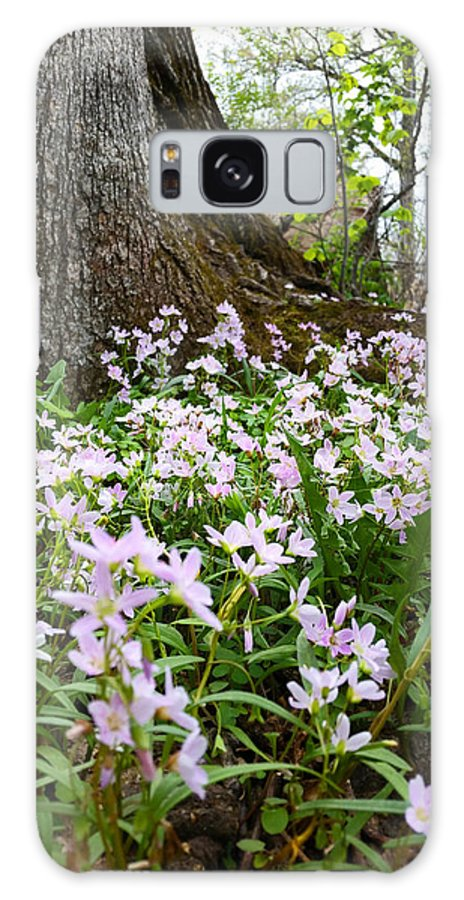 Wisconsin Galaxy S8 Case featuring the photograph Woodlands Spring Beauty by Brook Burling