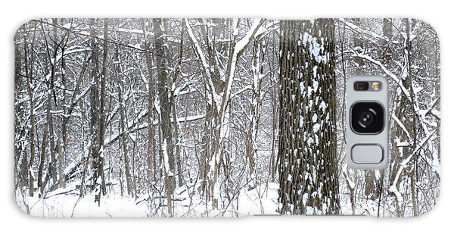 Winter Galaxy S8 Case featuring the photograph Woods In Winter by Stephen Becker