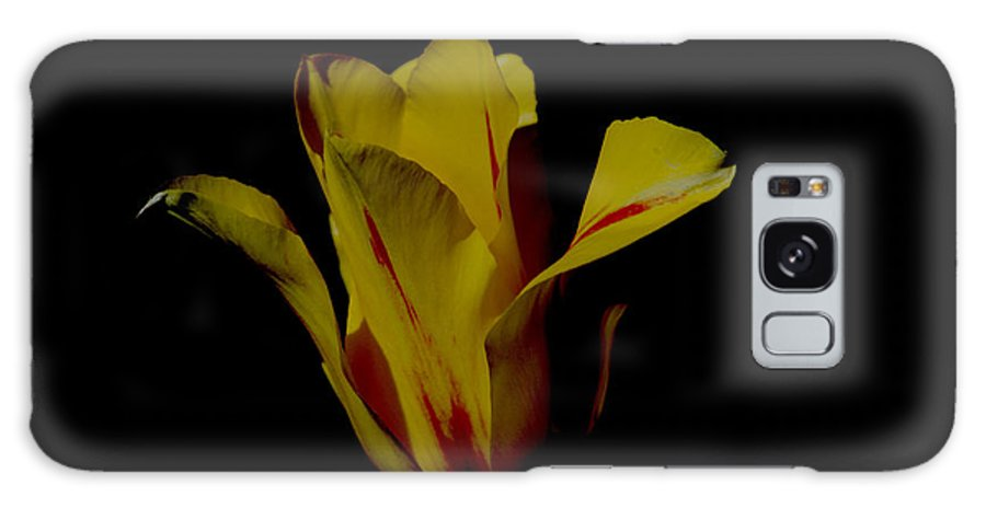 Tulip Galaxy S8 Case featuring the photograph Yellow And Red Tulip by Belinda Stucki