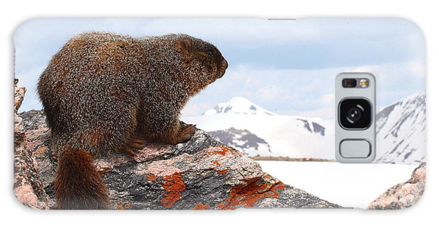Marmot Galaxy Case featuring the photograph Yellow-bellied Marmot Enjoying The Mountain View by Max Allen