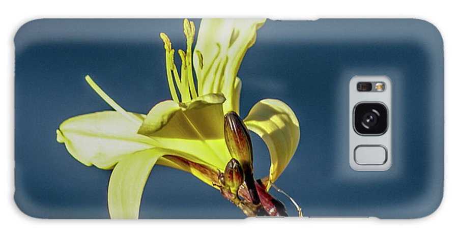 Vallejo Galaxy S8 Case featuring the photograph Yellow Bloom by Kristofer M Johnson