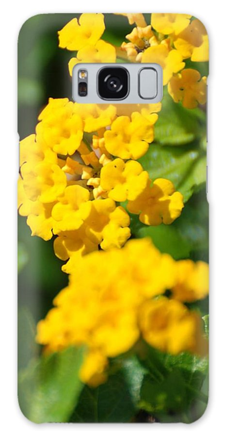 Flowers Galaxy S8 Case featuring the photograph Yellow Blooms by Rob Hans