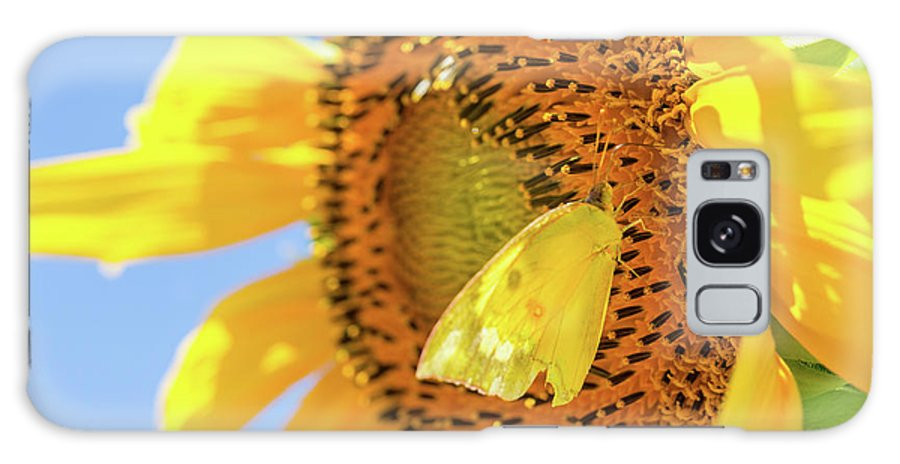 Art Galaxy S8 Case featuring the photograph Yellow Butterfly And Sunflower by SR Green