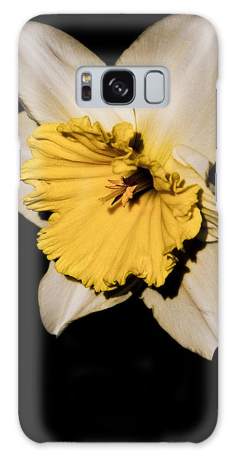 Daffodil Galaxy S8 Case featuring the photograph Yellow Daffodil by Steven Natanson