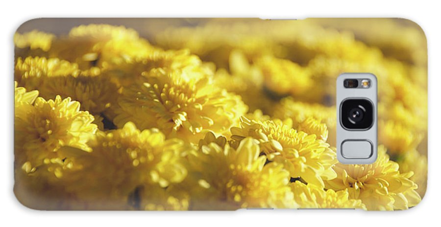Plant Galaxy S8 Case featuring the photograph Yellow Daisies by Andrea Anderegg