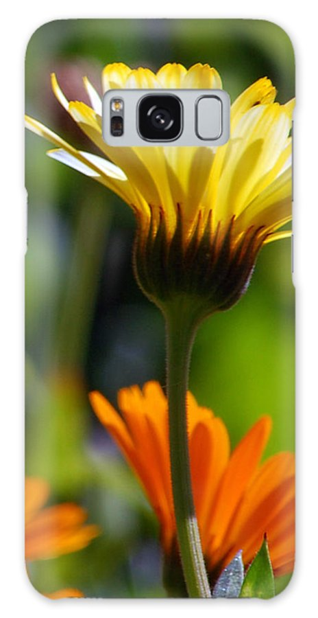 Daisy Galaxy Case featuring the photograph Yellow Daisy by Amy Fose