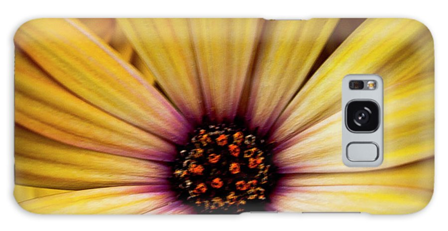 Daisy Galaxy S8 Case featuring the photograph Yellow Daisy by David Patterson
