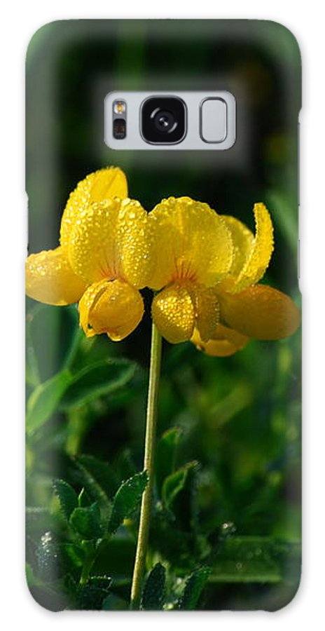 Birds Foot Trefoil Galaxy S8 Case featuring the photograph Yellow Dew Drops by Michelle Hastings