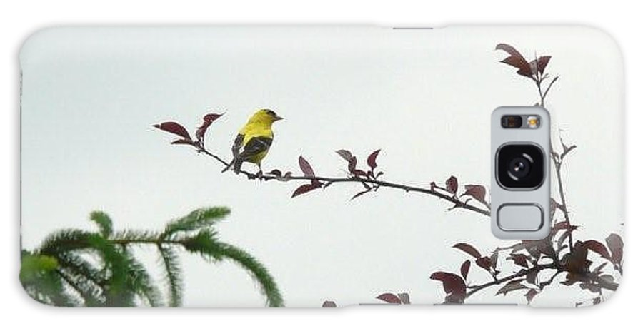 Finch Galaxy S8 Case featuring the photograph Yellow Finch by Barb Montanye Meseroll