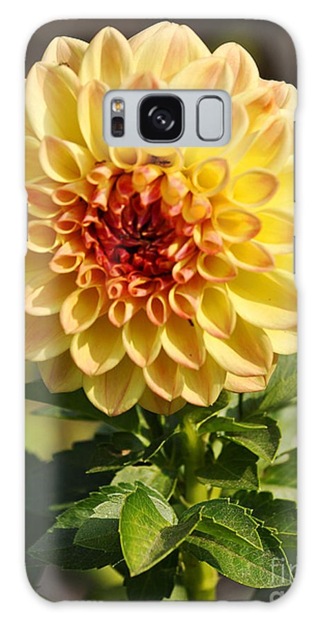 Clay Galaxy S8 Case featuring the photograph Yellow Flora by Clayton Bruster