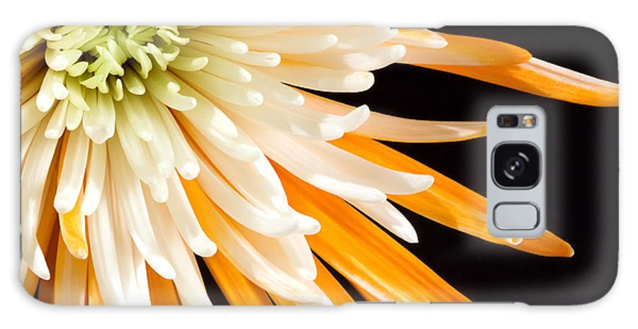 Flower Galaxy S8 Case featuring the photograph Yellow Flower On Black by Al Mueller