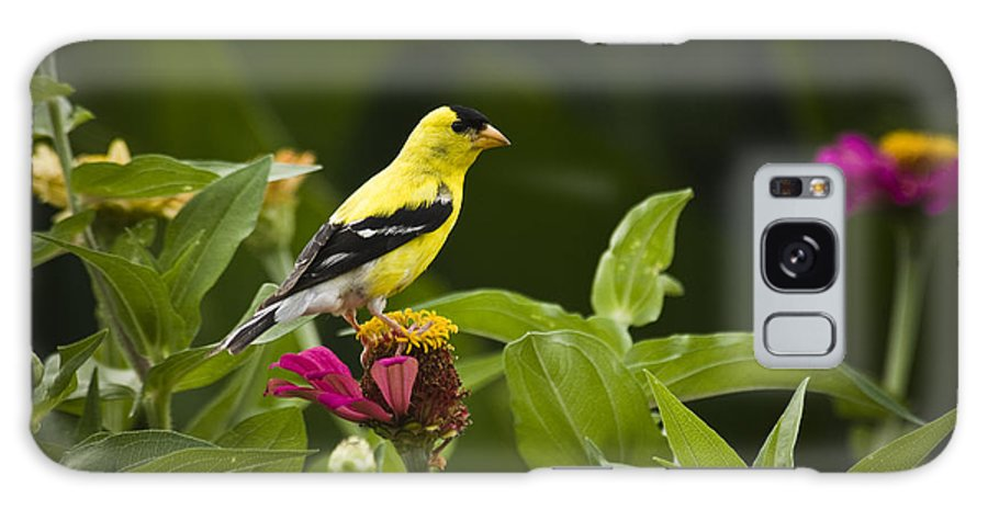 Bird Galaxy S8 Case featuring the photograph Yellow Goldfinch by Chad Davis