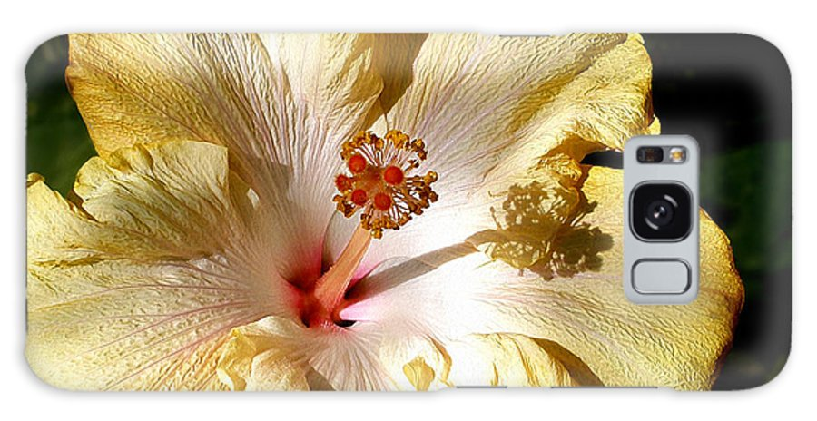 Photography Galaxy S8 Case featuring the photograph Yellow Hibiscus by Kaye Menner