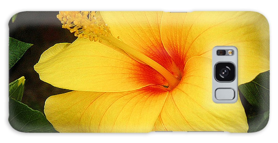 Nature Galaxy Case featuring the photograph Yellow Hibiscus by Lucyna A M Green