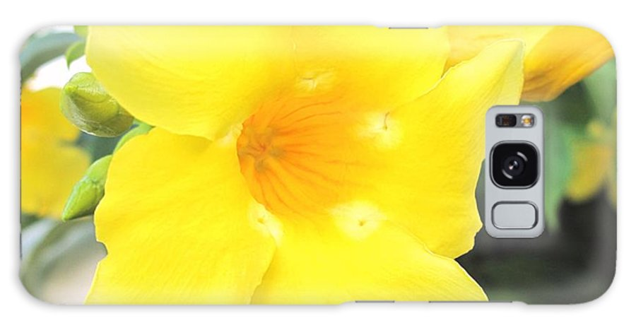 Yellow Galaxy S8 Case featuring the photograph Yellow Hibiscus St Kitts by Ian MacDonald