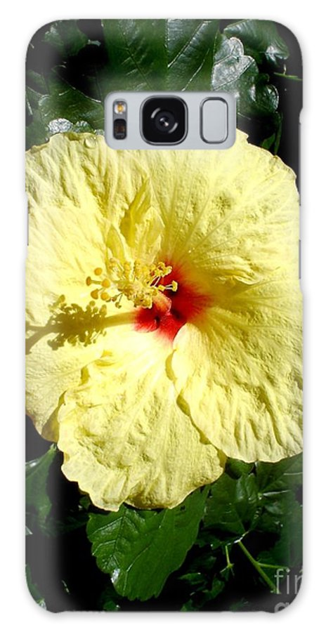Flower Galaxy S8 Case featuring the photograph Yellow Hibiscus The Hawaiian State Flower by Chandelle Hazen