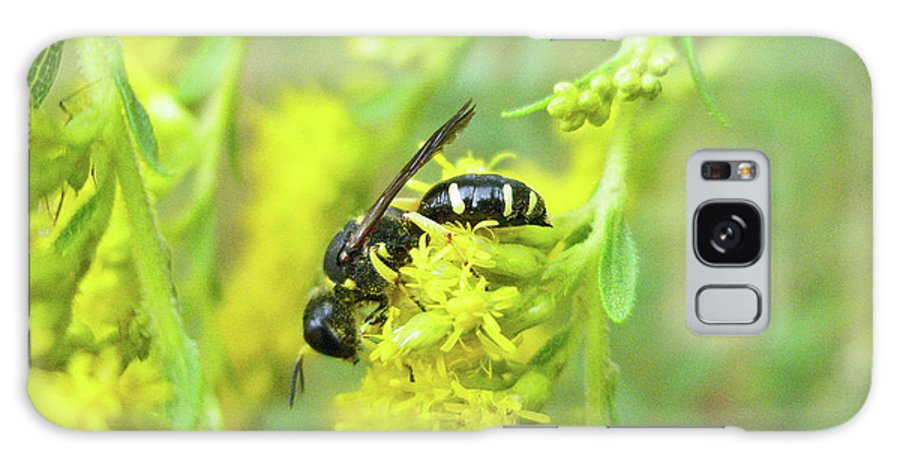 Wasp Galaxy S8 Case featuring the photograph Yellow Jacket by Mother Nature