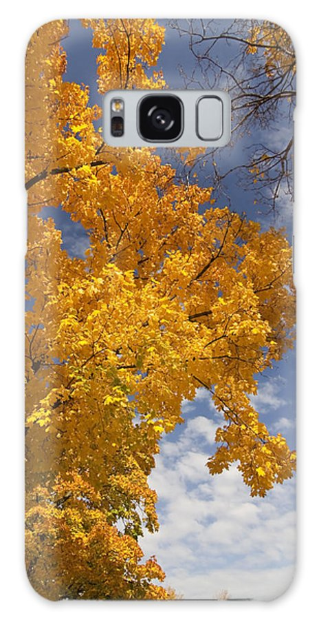 Fall Colors Galaxy S8 Case featuring the photograph Yellow Maple Tree by Sven Brogren