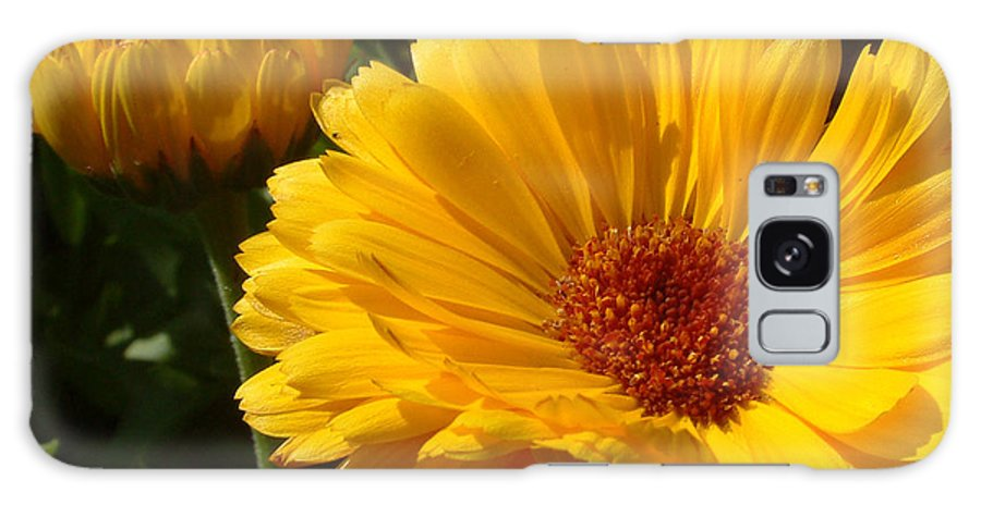Flower Galaxy S8 Case featuring the photograph Yellow by Mark Grayden