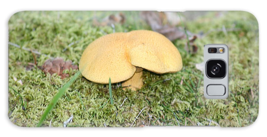 Mushrooms Nature Plants Wild Moss Acorns Forest Galaxy S8 Case featuring the photograph Yellow Mushroom by Andrea Lawrence