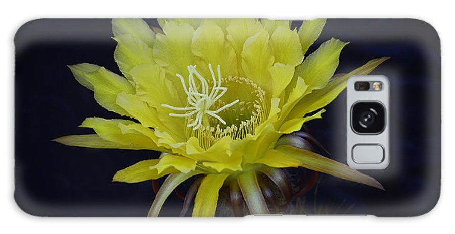 Arizona Galaxy S8 Case featuring the photograph Yellow Night Blooming Cactus by Saija Lehtonen