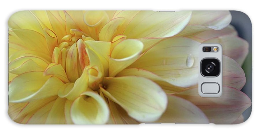 Dahlia Galaxy S8 Case featuring the photograph Yellow Petals With Raindrop by Patricia Strand