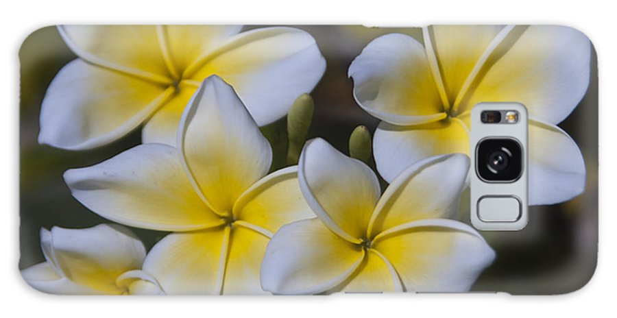 Flowers Galaxy S8 Case featuring the photograph Yellow Plumeria by Margaret Fortunato