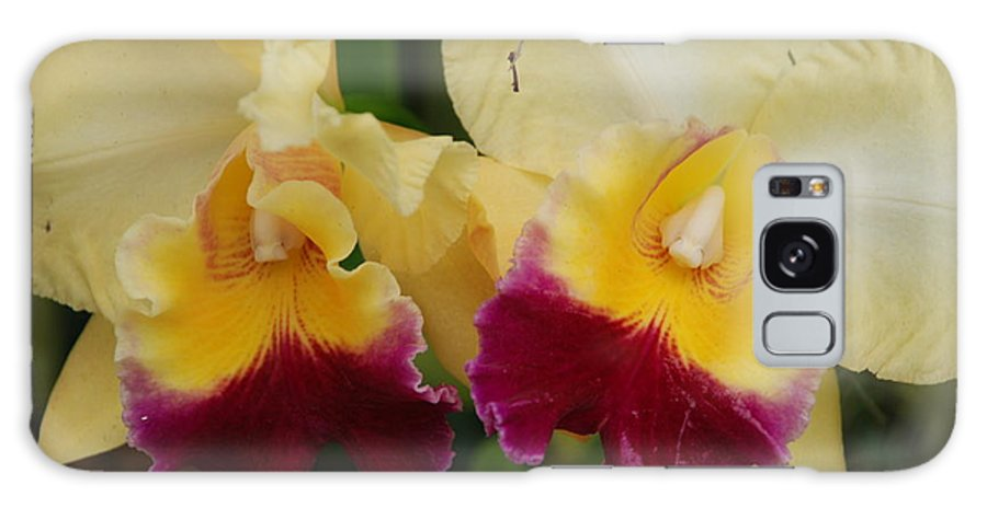 Macro Galaxy S8 Case featuring the photograph Yellow Purple Orchids by Rob Hans