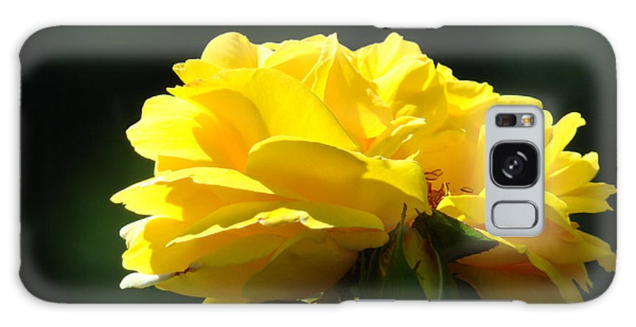 Rose Galaxy S8 Case featuring the photograph Yellow Rose Sunlit Rose Garden Landscape Art Baslee Troutman by Baslee Troutman