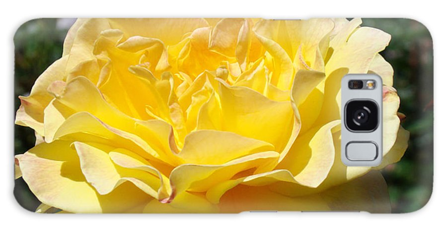 Rose Galaxy S8 Case featuring the photograph Yellow Rose Sunlit Summer Roses Flowers Art Prints Baslee Troutman by Baslee Troutman