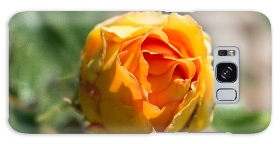 Rose Galaxy S8 Case featuring the photograph Yellow Rose by Tammy Bryant