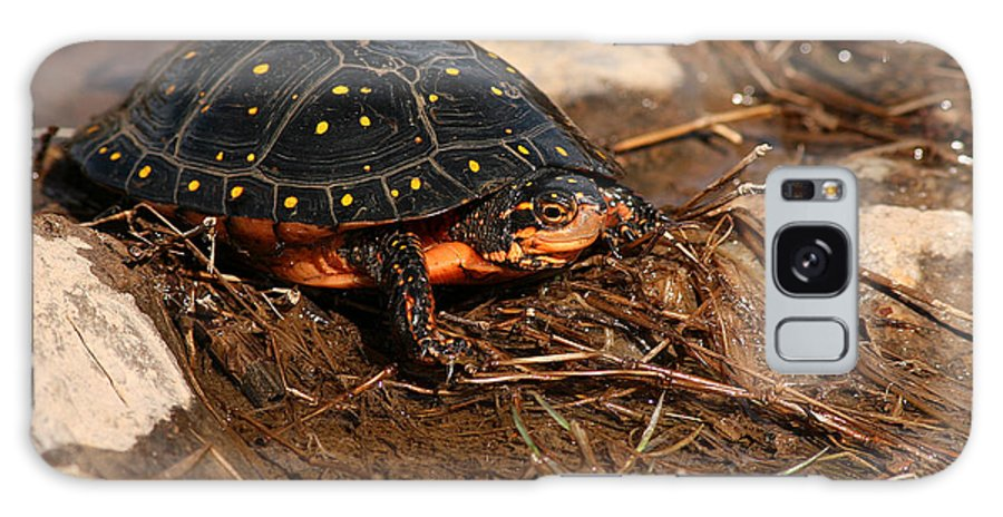 Turlte Galaxy S8 Case featuring the photograph Yellow-spotted Turtle Crawling Through Wetland by Max Allen