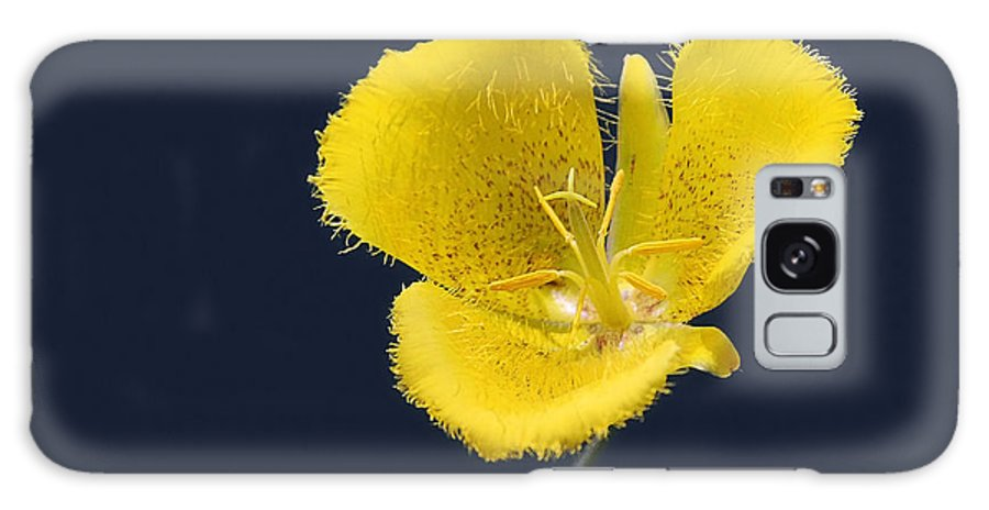 Flower Galaxy S8 Case featuring the photograph Yellow Star Tulip - Calochortus Monophyllus by Christine Till