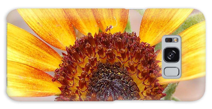 Sunflower Galaxy S8 Case featuring the photograph Yellow Sunflower by Amy Fose