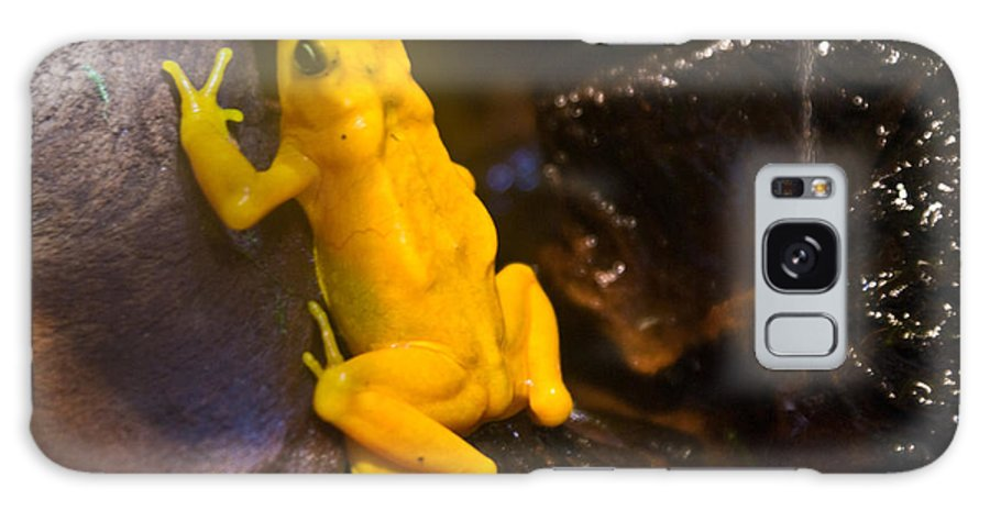 Frog Galaxy Case featuring the photograph Yellow Tropical Frog by Douglas Barnett