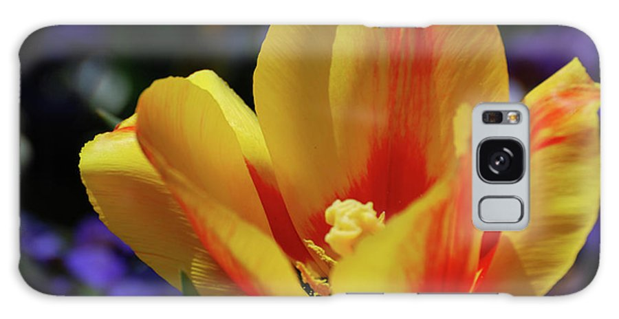Tulip Galaxy S8 Case featuring the photograph Yellow Tulip Blossom Streaked With Red In The Spring by DejaVu Designs