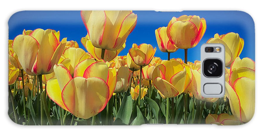 Tulip Galaxy S8 Case featuring the digital art Yellow Tulips With An Orange Flare by Mia DeBolt