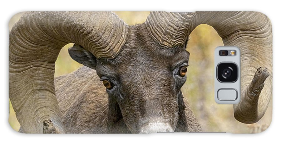 Yellowstone Ram Galaxy S8 Case featuring the photograph Yellowstone Ram by Wes and Dotty Weber