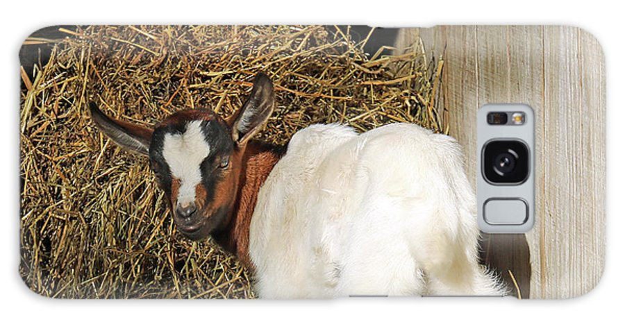 Goat Galaxy S8 Case featuring the photograph You Lookin At Me? by Steve Gass