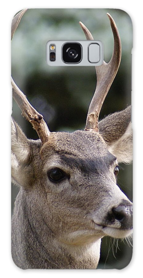 Spokane Galaxy S8 Case featuring the photograph Young Buck by Ben Upham III