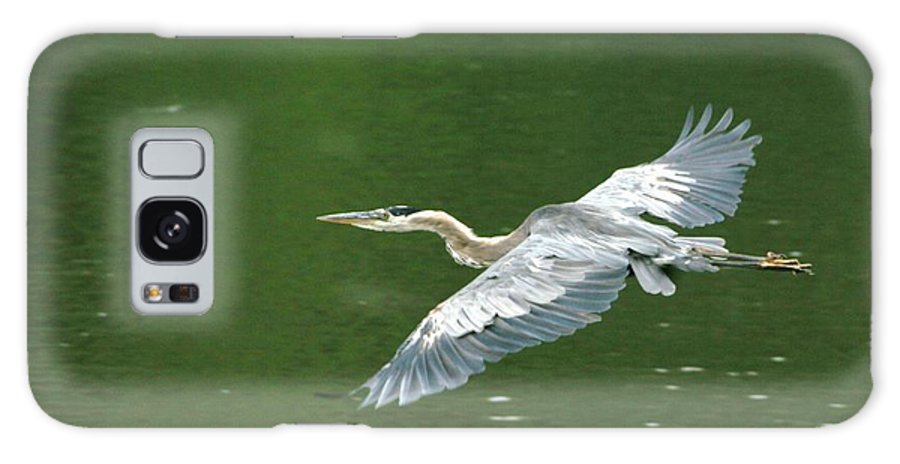 Landscape Nature Wildlife Bird Crane Heron Green Flight Ohio Water Galaxy S8 Case featuring the photograph Young Great Blue Heron Taking Flight by Dawn Downour